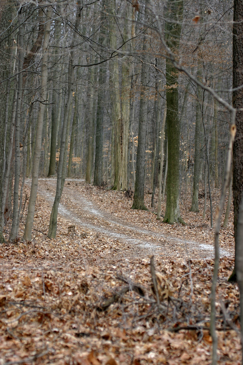 Path through the woods, Forest Park, North Terre Haute.